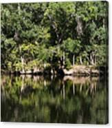 River In The Jungle Canvas Print