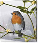 Robin On Mistletoe Canvas Print