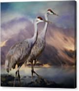 Rocky Mountain Sandhill Cranes Canvas Print