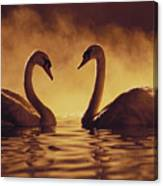 Romantic African Swans Canvas Print