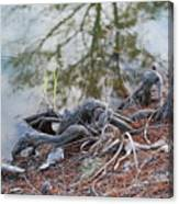 Rooted Lake Edge Canvas Print