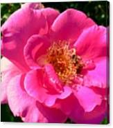 Rose Bee Canvas Print