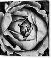 Rose Closeup In Monochrome Canvas Print
