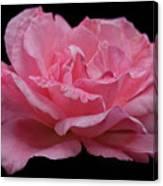 Rose - Flower Canvas Print