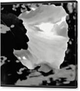 Rose Of Sharon In Black And White Canvas Print