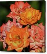 Pink And Orange Roses Canvas Print