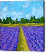 Rows Of Lavender In Provence Canvas Print