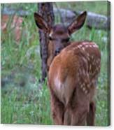 Rubber Necking Canvas Print