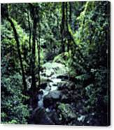 Rushing Stream El Yunque National Forest Canvas Print