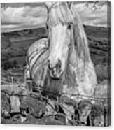Rustic Horse  Canvas Print