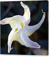 Sacred Datura Canvas Print