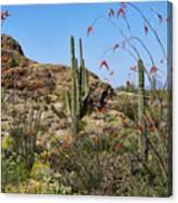 Saguaro National Park East Scene Iv Canvas Print