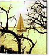Sailboat Golden Sunset Canvas Print