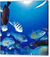 Saipan Marine Life Canvas Print
