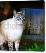 Sapphire Eyed Cat Canvas Print