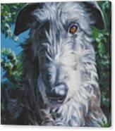 Scottish Deerhound Canvas Print