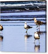 Sea Birds Canvas Print