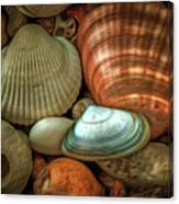 Sea Pebbles With Shells Canvas Print