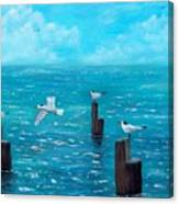 Seagull Seascape Canvas Print