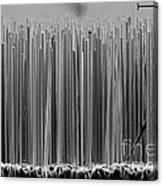 Semiconductor Nanowires, Sem Canvas Print