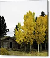September's Soliloquy Canvas Print
