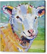 Sheep Head Canvas Print