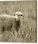 Sheep In A Meadow Canvas Print