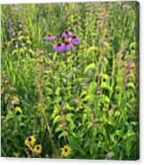 Shelley Kelly Prairie Wildflowers Canvas Print