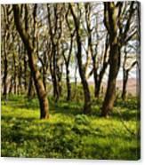 Shetland Woods Canvas Print