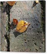 Silver Birch Leaves Lying On A Brick Path In A Cheshire Garden On An Autumn Day   England Canvas Print