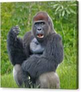 1- Silverback Western Lowland Gorilla  Canvas Print