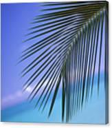 Single Palm Frond Canvas Print
