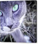 Skitty Cat Canvas Print