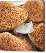Small Asian Dried Shrimp In Kep Market Cambodia Canvas Print