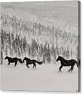 Snow Angels Canvas Print