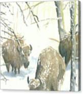 Snow Buffs Canvas Print