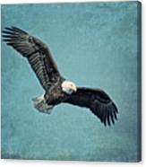 Soaring Bald Eagle Canvas Print