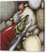 Sockeye Salmon Canvas Print