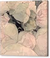 Soft Pink Peonies Canvas Print