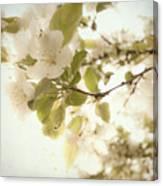 Soft White Flowers Canvas Print