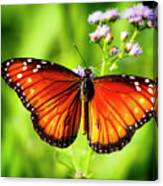 Soldier Butterfly Canvas Print