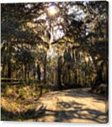 Southern Oak Shadows  Canvas Print