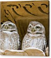 Spotted Owlets Canvas Print