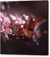 Spring Beauty- 2 Canvas Print