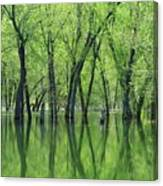 Spring Green Reflections  Canvas Print