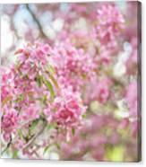 Spring Lightness Canvas Print