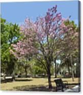 Spring Magnolia In Winter Park  Canvas Print