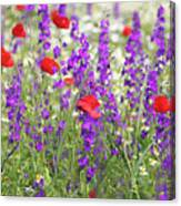 Spring Meadow With Wild Flowers Canvas Print