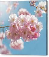 Spring Pinks Canvas Print