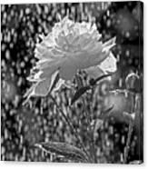 Spring Rain - 365-13 Canvas Print